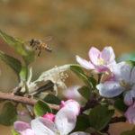 Recursos florales en el norte argentino